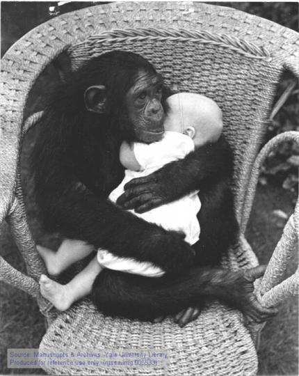 Şempanze ve İnsan Bebeği (Şefkat)