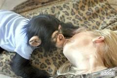 Şempanze (Öpücük)