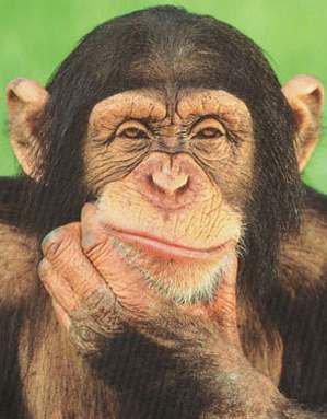 Şempanzelerde algı ve düşünme gelişmiştir ve gelişmektedir.