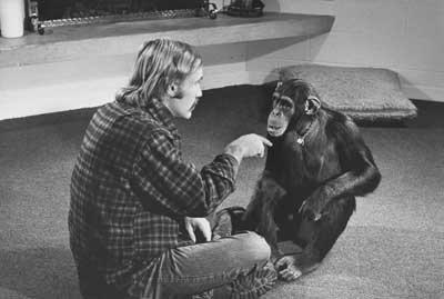 Şempanze (İşaret Dili)