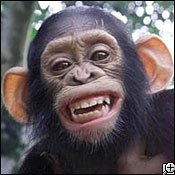 Şempanze (Kahkaha)