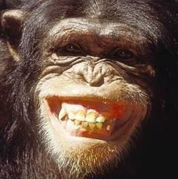Şempanzeler ile ortak yüz kasları paylaşırız ve ifadelerimiz benzerdir.