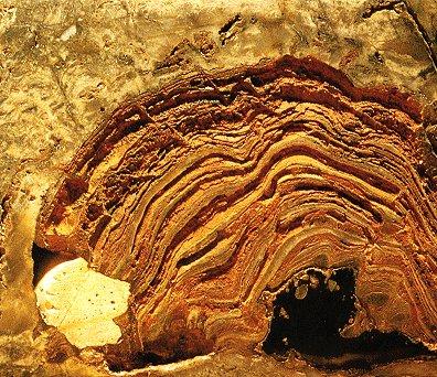 Stromatolit (Fosil)