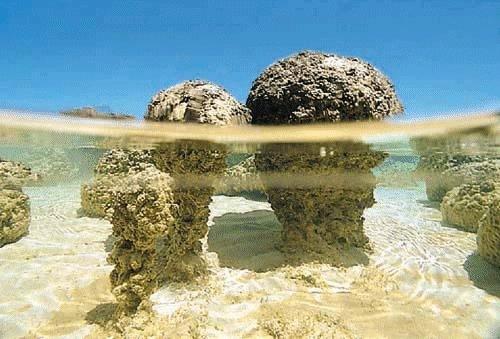 Stromatolit (Canlı)
