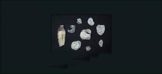 Etiyopya Fosilleri