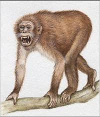 Aegyptopithecus (Rekonstrüksiyon)