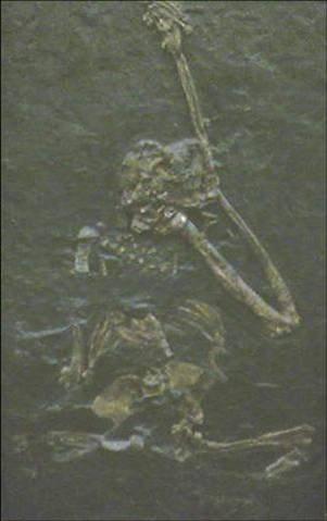 Oreopithecus (Fosil)
