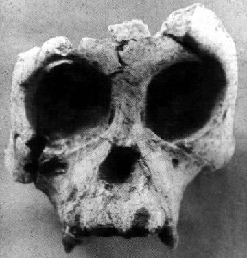 Lufengpithecus
