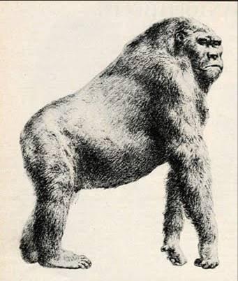 Gigantopithecus (Rekonstrüksiyon)