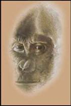 Ouranopithecus (Çizim)