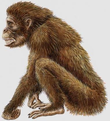 Dryopithecus (Rekonstrüksiyon)