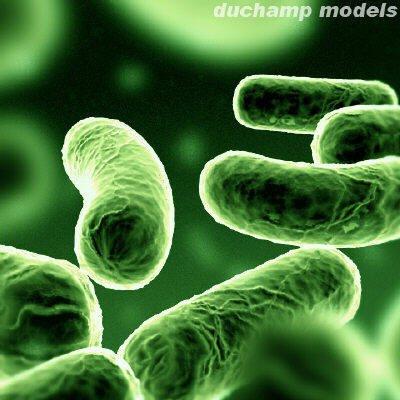 Geoalkalibacter ferrihydriticus