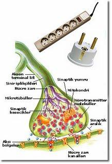 Sinirler Arası Biyokimyasal İletim