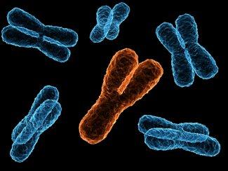 Hayal gücüyle desteklenen, gerçeğe yakın bir kromozom görüntüsü...