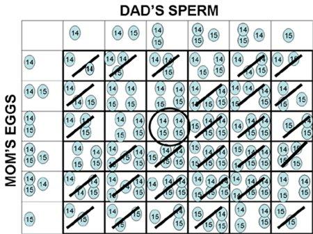 Kromozom Eksikliğine Sahip İki Bireyin Çiftleşmesi Durumu