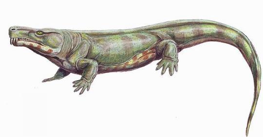 Limnoscelis (Çizim Rekonstrüksiyon)