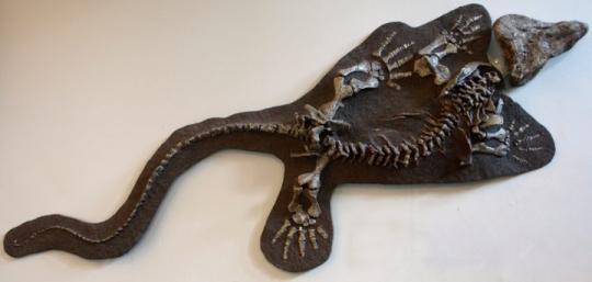 Limnoscelis (Fosil Kalıbı*), Montreal Redpath Müzesi *Fosil kalıbı, keşfedilen fosillerin taşınması yerine, birebir dökmesinin taşınarak fosillerin korunmasını hedefleyen bir yöntemdir.