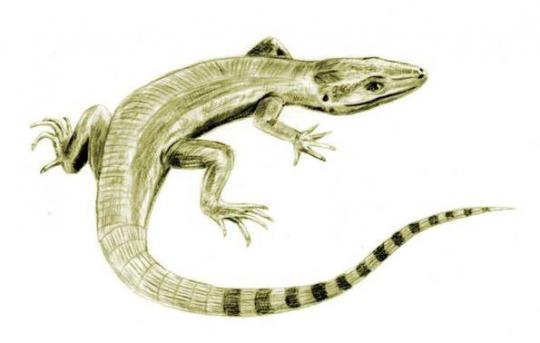 Solenodonsaurus (Çizim Rekonstrüksiyon)