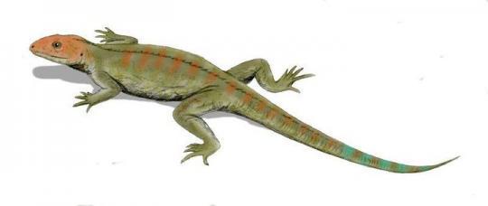 Hylonomus (Çizim Rekonstrüksiyon)