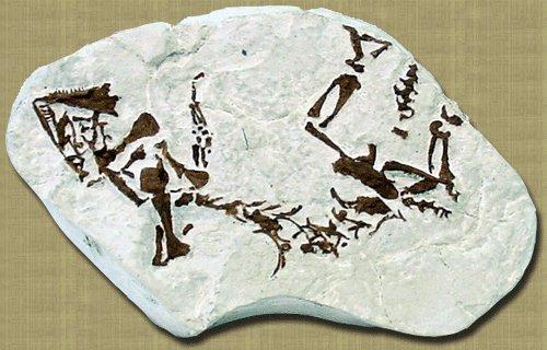 Paleothyris (Fosil)