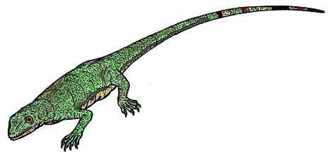 Paleothyris (Çizim)