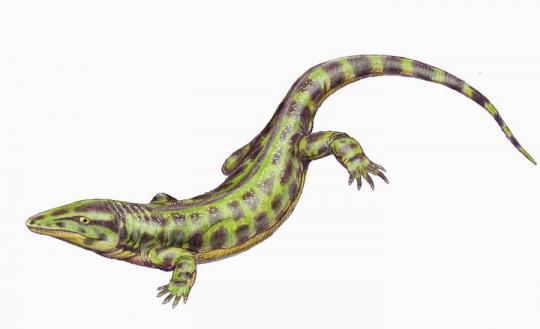 Solenodonsaurus (Çizim)
