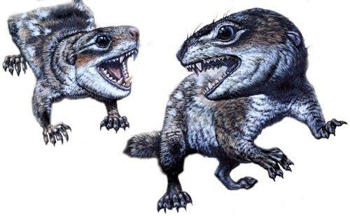 Diarthrognathus