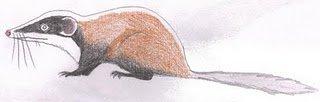 Kuehneotherium