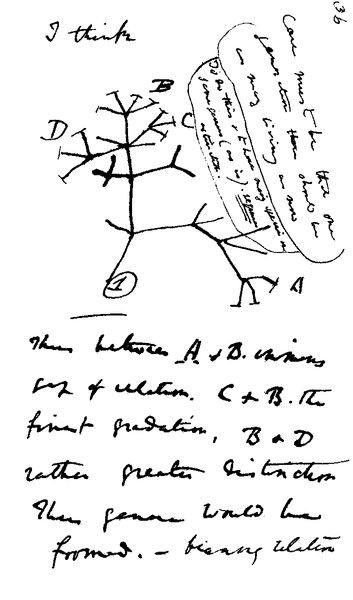 Evrim Ağacı (İlk Çizim, Charles Darwin, Kırmızı Defter)