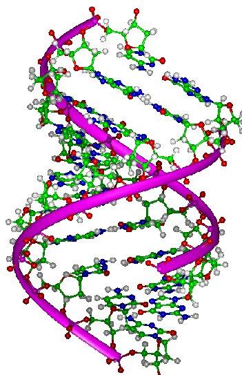 Heliks DNA