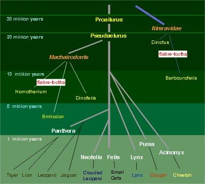Evrim Ağacı