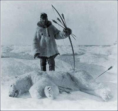 Arktik bölgelerde yaşayan avcılar da özellikle kutup ayılarını avlayarak hayatta kalmaktadırlar.
