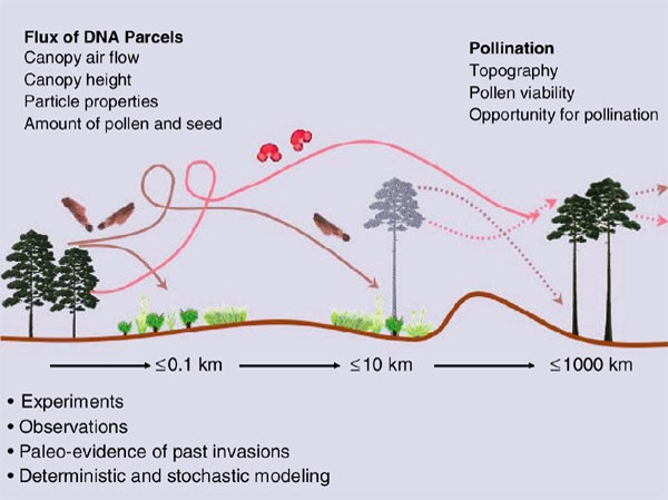 Bitkilerde genetik göç tohumların ve polenlerin çeşitli yöntemlerle uzun mesafeler kat ederek başka popülasyonlara karışmasıyla olmaktadır ve bitki evriminin önemli çeşitlilik mekanizmalarından biridir. Bitkilerin yüksekliği, rüzgar hızı/yönü, tohumların ve polenlerin yapısı ve miktarı DNA parçalarının yani genlerin akış miktarını ve hızını belirler. Yeryüzü şekilleri, polenlerin yaşayabilirlikleri, polenleşme imkanları ise bu göçün evrimsel başarısını belirleyen faktörlerin bazılarıdır. Tüm bunların etkisi altında, bir popülasyon kendisinden yüzlerce ve hatta kimi zaman binlerce kilometre uzaktaki popülasyonlara gen göçü gerçekleştirebilir. Bunun evrimsel değişimlere yol açtığı deneylerle, gözlemlerle, fosil kayıtlarla, deterministik ve stokastik modelleme yöntemleriyle gösterilmiş ve ispatlanmıştır.