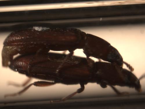 Birçok böcek türünde eşcinsellik sıkça görülmektedir. Bu cinsel faaliyet, erkekler veya dişiler arasında olabilir.
