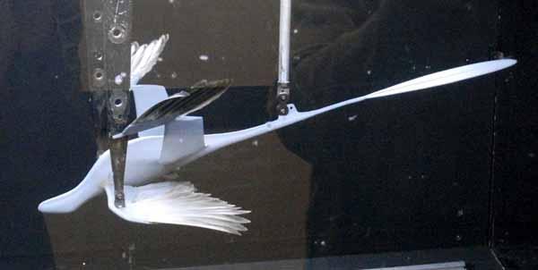 Rüzgar tüneli içerisine yerleştirilmiş Microraptormodeli...