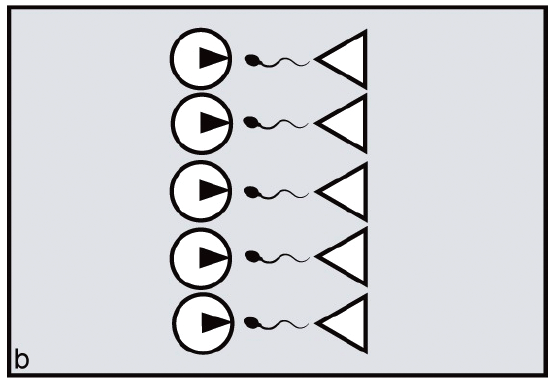 Bir popülasyondaki dişilerin adet döngüsü senkronizasyonu yoksa, (a) şeklinde gözüken gibi bir durum oluşur ve her erkeğin, kendi üreme zamanında, aktif dişiyi bulması gerekir. Öte yandan dişilerin döngüleri senkronize ise, (b) durumu gözlenir ve her erkek bir dişiyle çiftleşebilir.