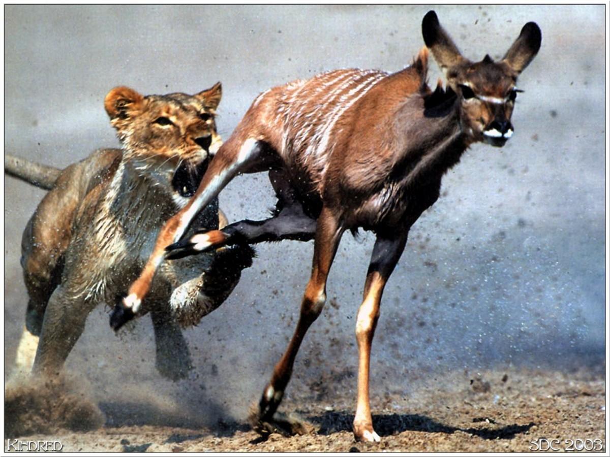 Hayatta kalma mücadelesinin sonucu, uyum başarısı ile belirlenir. Uyum başarısı, hayatta kalma mücadelesinin bir sonucudur.