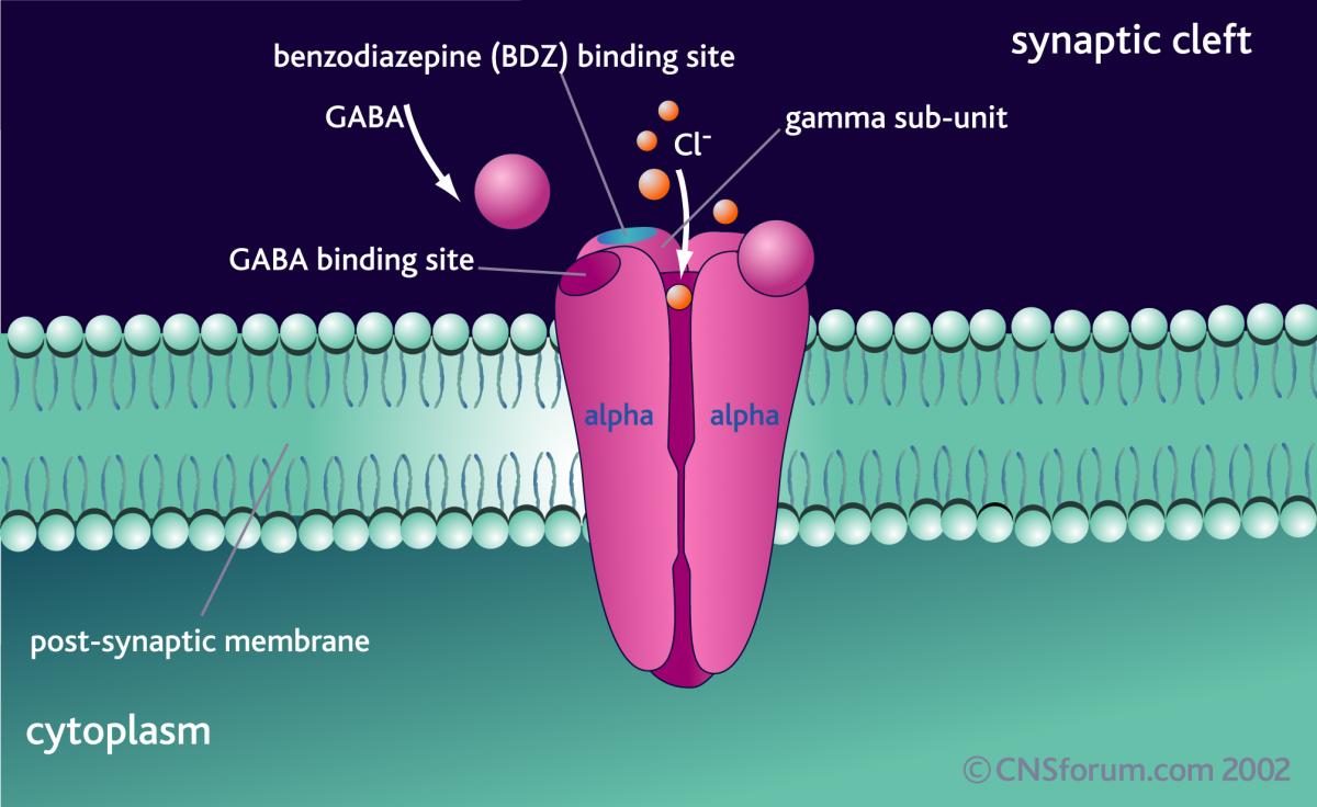 GABA ve bağlandığı reseptörlerle ilgili bir görsel...