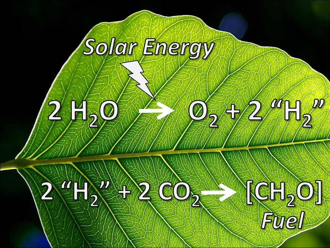 Mühendisler tarafından üretilen yapay yaprak, fotosentez yaparak enerji üretebilmektedir.