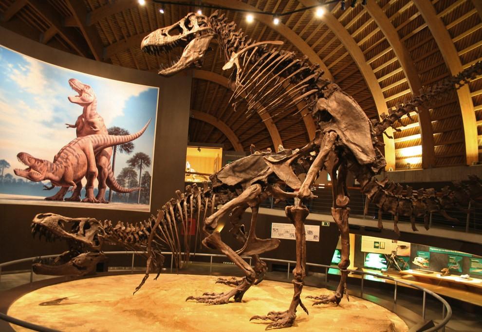 Çiftleşme pozisyonunda iki T-rex resmine bakan, çiftleşme pozisyonunda iki T-rex fosili.