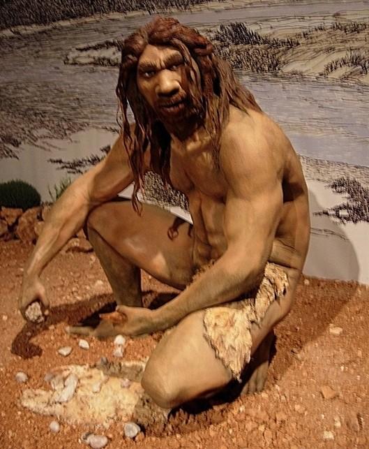 Tıpkı ailevi kuzenlerimizde olduğu gibi, 400-500 bin yıl öncesine gittiğimizde, bizimle aynı tür olmayan ilk canlı ile Homo neanderthalensis ile soy hatlarımız birleşir. Bunu, kardeşimiz ya da birinci dereceden kuzenimiz ile soy hatlarımızın birleşmesine benzetebilirsiniz. Ancak burada artık birey bazında ve aynı tür içerisinde değil, farklı türlerin birleşmesi şeklinde bir durum görülmektedir: Homo sapiens ile Homo neanderthalensis türleri, Homo heidelbergensis dediğimiz ve yukarıda görülen bir ortak atada birleşmektedir. Bu ortak ataya baktığınızda da kolaylıkla