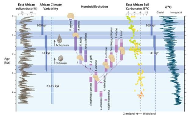Plio-Pleistosen Devri boyunca meydana gelen önemli paleoiklimsel olayların ve insansıların evrimiyle alakalı olayların özet şeması. Gri şeritler, Afrika ikliminin yüksek enlemlerdeki buzul döngülerinin başlangıcı ve şiddetlenmesiyle eşzamanlı olarak 2,8 (+- 0,2) milyon yıl önce ve daha sonra da 1,7 (+-0,1) milyon yıl ile 1,0 (+-0,2) yıl önce meydana gelen aşamalı değişimlerin ardından gittikçe artan biçimde daha kurak hale geldiği dönemleri belirtir. Soldan sağa: 1-) Okyanus Sondaj Projesi'nin 721/722 numaralı sahasındaki toprak kaynaklı toz yüzdesi ile devinimdeki değişkenliklere (23-19 binyıl) ve karakteristik buzul döngülerine (41 binyıl ve 100 binyıl) bağlanan toz akışının baskın döngülerindeki buna tekabül eden değişimler. 2-) İnsansı türlerinin tahmini ilk ve son görülüş tarihleri ve aralarındaki olası akrabalık bağları. 3-) Doğu Afrika'daki insansı yerleşimlerinden elde edilen ve ormanlık alandan otlaklara olan aşamalı geçişi belgeleyen toprak karbonat karbon izotop verileri. 4-) Bileşik bentik foraminiferlerden elde edilmiş ve yüksek enlemlerdeki buzul döngülerinin evrimini ve buzulsal değişkenliğin baskın döngüsünü gösteren oksijen izotop kayıtları.