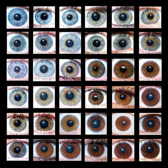 İnsanlarda görülen bazı göz renkleri...