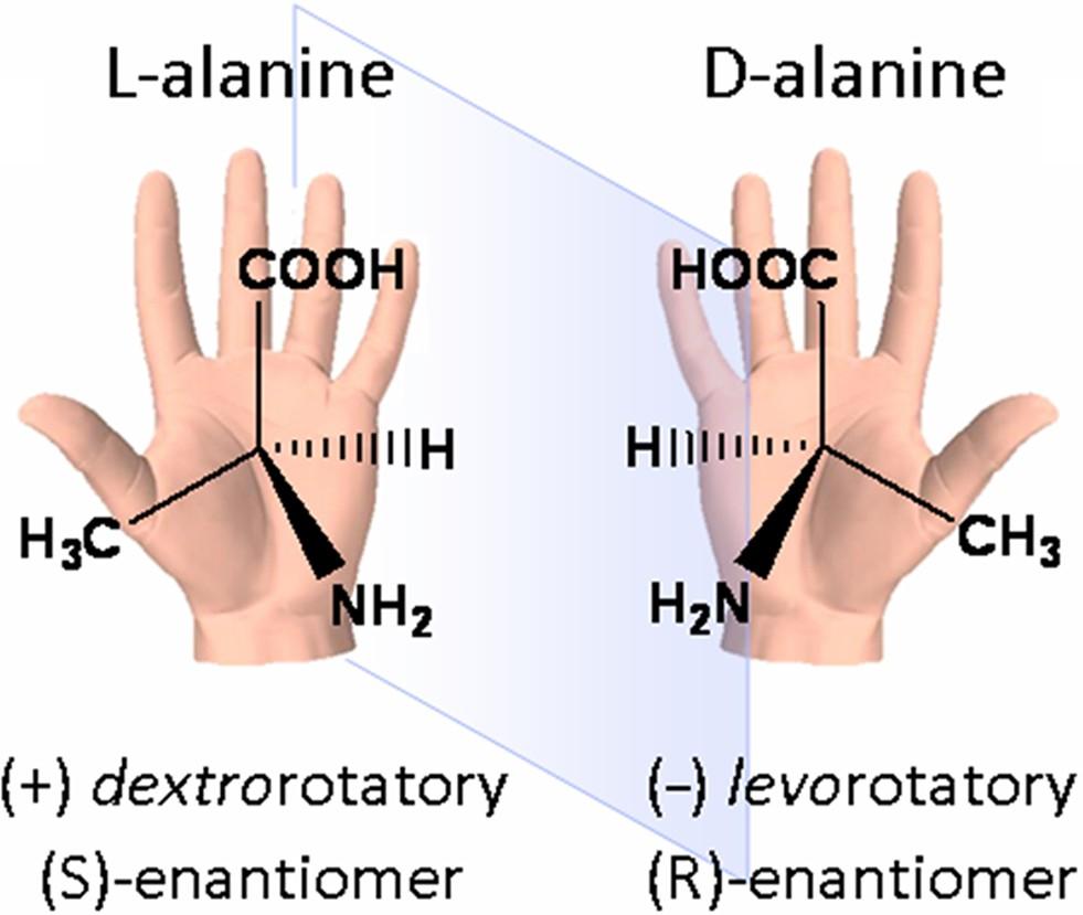 """Aminoasitlerin ayna simetrik yapısını (kiralitesini) gösteren şema. """"Sağ elli"""" ve """"sol elli"""" denmesinin nedeni, iki elin birbirinin ayna görüntüsü olması gibi, aminoasitlerin de birbirinin ayna görüntüsü olan iki yapısı olabilmesidir."""