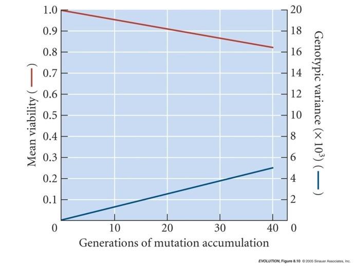 Mutasyonların uyum başarısına ortalama etkisi...