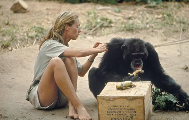Jane Goodall (1960'lı yıllar)