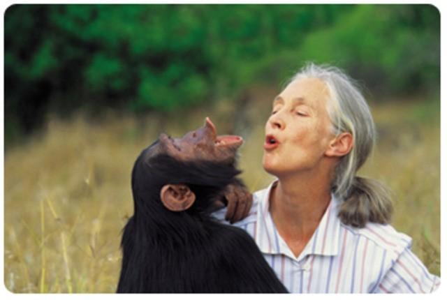 Jane Goodall (Günümüz)