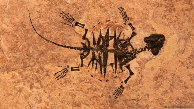On milyonlarca yıl yaşında, fosilleşmiş bir kaplumbağa