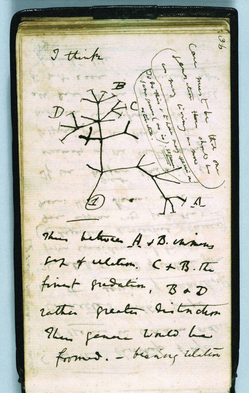 Darwin'in Defteri ve İlk Evrim Ağacı Çizimi. Daha fazla bilgi için kaynağa tıklayınız.