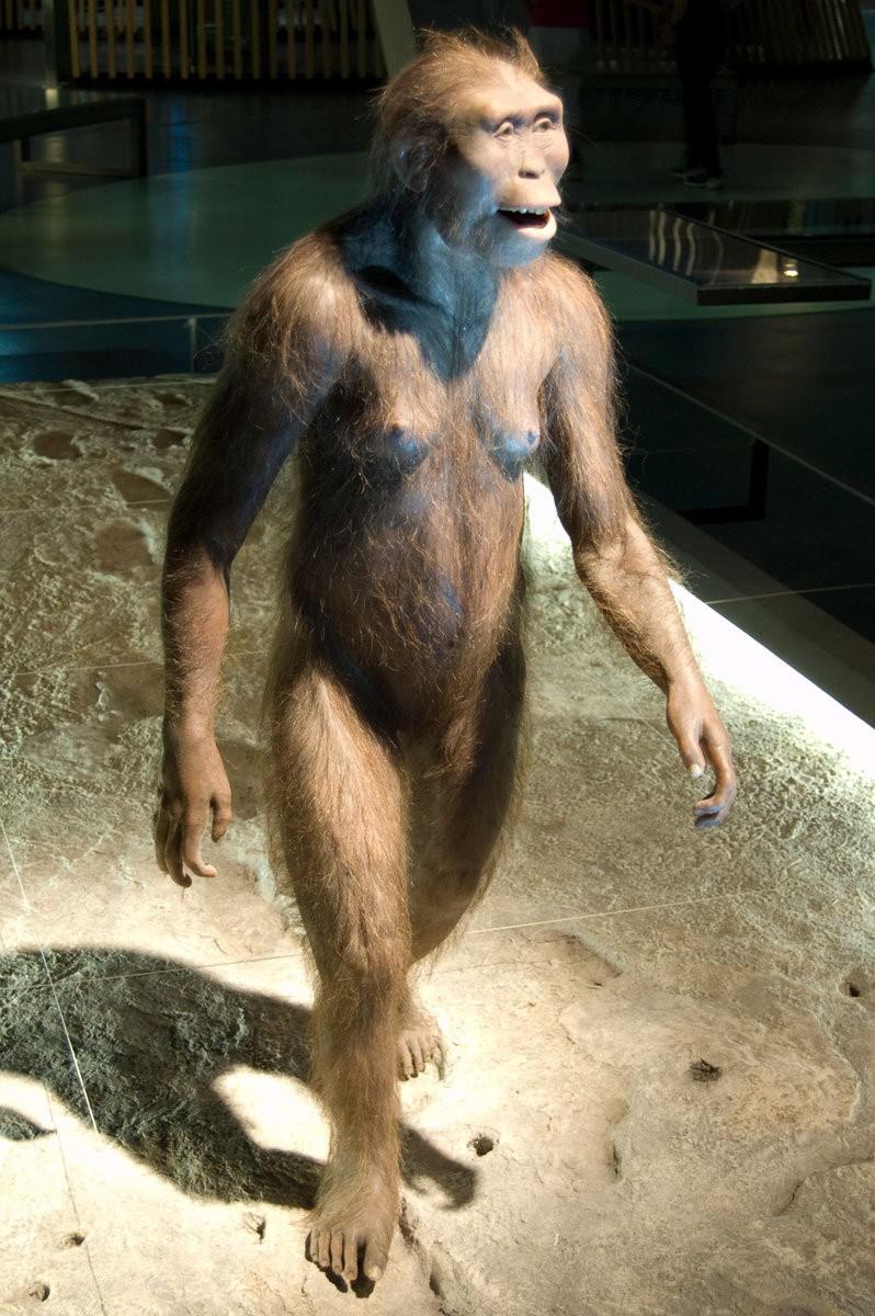 """Australopithecus afarensistürüne ait örnek bir birey. Belki halen """"insansı"""" özellikler taşıyor, ancak artık 4-5 milyon yıl geriye gittiğimiz için, farklılıklar çok daha bariz."""